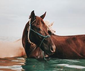 amazing, awesome, and horse image