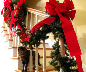 christmas, cat, and decoration image