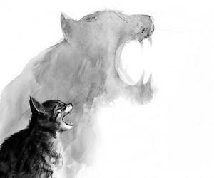 animals, wild, and black image