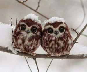owl, animal, and winter image