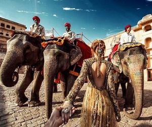 india, elephant, and travel image