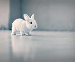 animals, lapin, and rabbit image