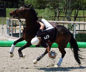 girl and horseball image