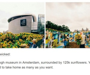 art, museum, and sunflowers image