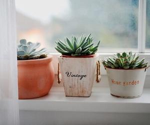 plants, vintage, and cactus image