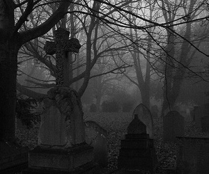 black and white, cemetery, and tree image
