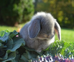 rabbit, bunny, and adorable image