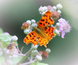 butterfly, flowers, and insects image