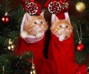 animals, christmas, and pets image
