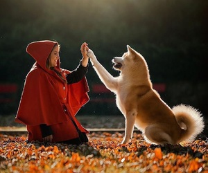 dog, red, and fairytale image