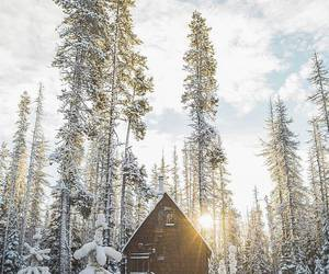 cold, photography, and snow image