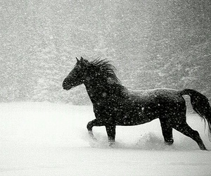 horse, snow, and beautiful image