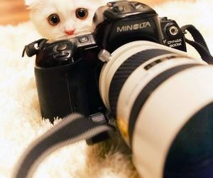 cat, cute, and camera image
