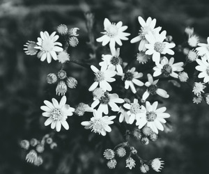 background, flowers, and blackandwhite image