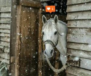 i love horses and ❤ image