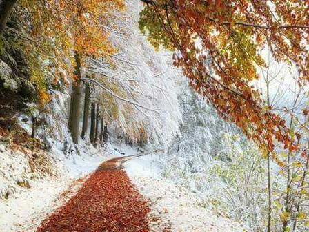autumn and winter image