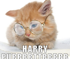 cats, funny cat, and harry potter image