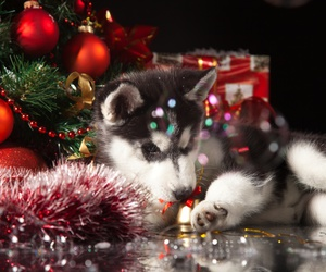 christmas, lights, and puppy image