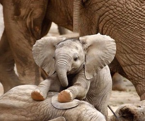 adorable, elephants, and animal image