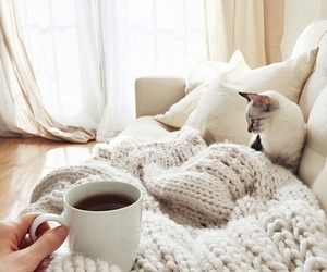 cat, coffee, and cozy image