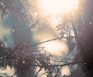 winter, sun, and tree image