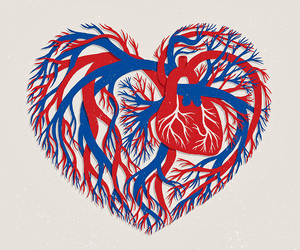 heart, arteries, and blue image