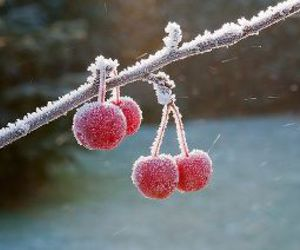 cherry, snow, and photography image