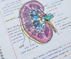 biology and drawing image