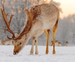 animal, winter, and snow image