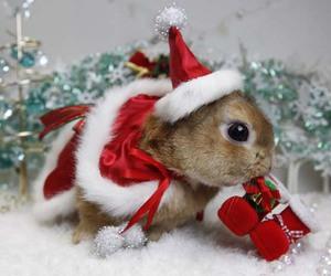 christmas, cute, and bunny image