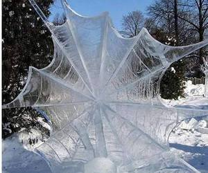 nature, spider, and ice image