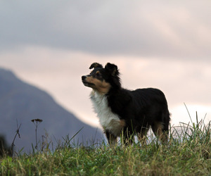 dog, cute, and grass image