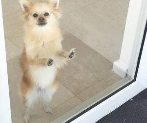adorable, sweet, and animal image