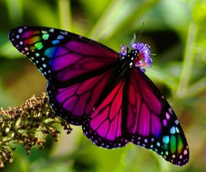 butterfly, nature, and rainbow image