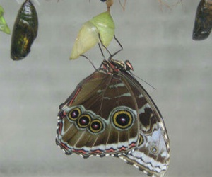 butterfly, natur, and wonderland image