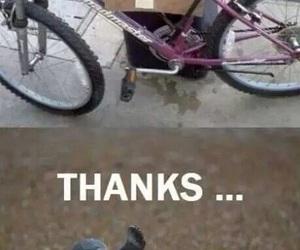 funny, seal, and bike image