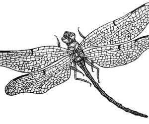 black, dragonfly, and drawing image