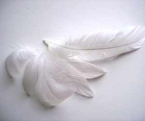 angel, beautiful, and feathers image