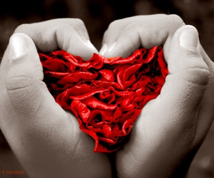 heart, red, and i love image