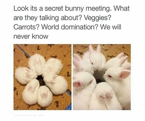 bunny, funny, and cute image