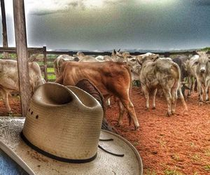cowboy, farm, and countrylife image