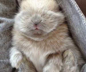 adorable, soft, and bunny image