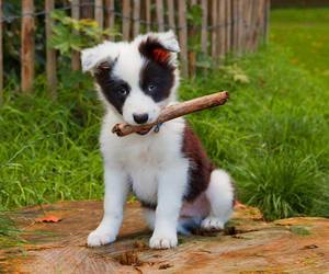 puppy and dogs image
