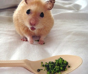 adorable, eating, and hamster image