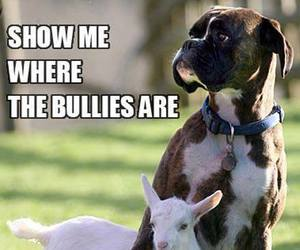 dog, bully, and funny image