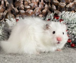 adorable, hamster, and holiday image