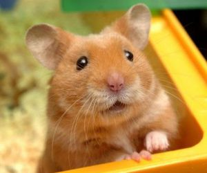 adorable, hamster, and pets image