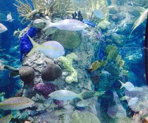 americas, aquarium, and new orleans image
