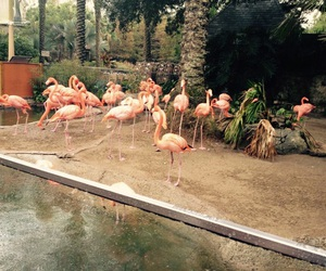 flamingos, new orleans, and nola image