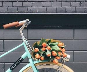 flowers, bike, and tulips image